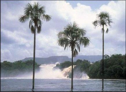 palmiero.jpg